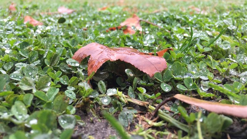 Earthing, Rain orShine