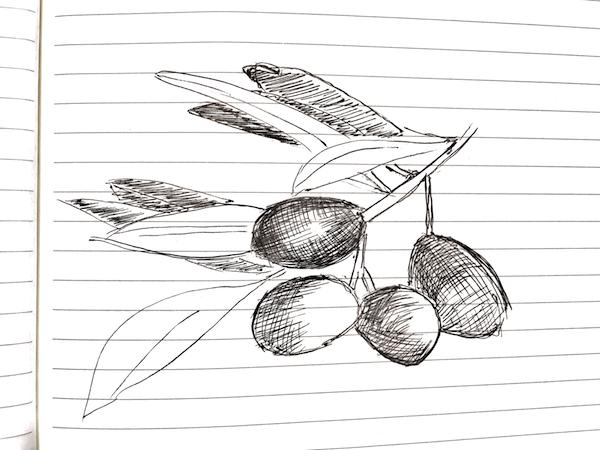 NL 46 Olive Branch Sketch The Brilliant Beast Blog.png